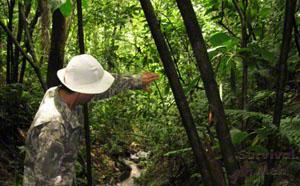 Jungle Guide